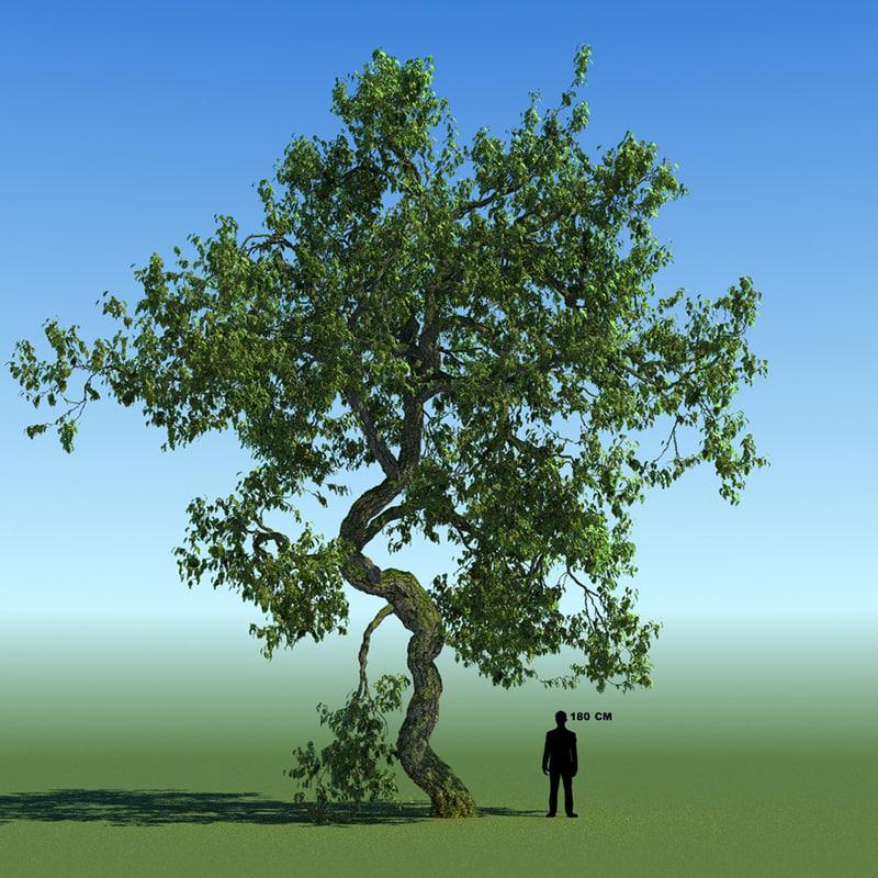 max leaf season tree