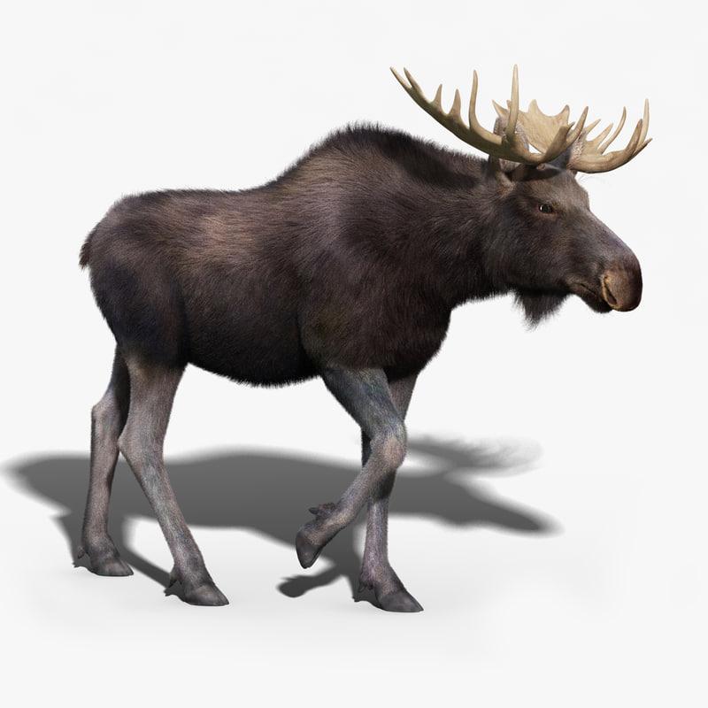 moose fur rigged 3d max
