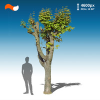 Cut Out Tree S 2