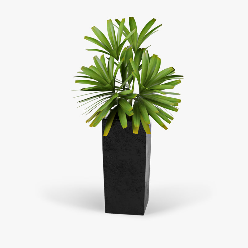 3d natural indoor plant pot model