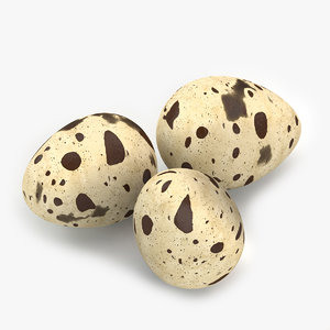 3d model quail eggs