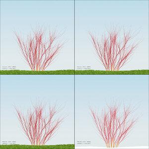 season cardinal red twig 3d max