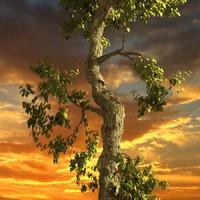 3d model broadleaf leaf tree