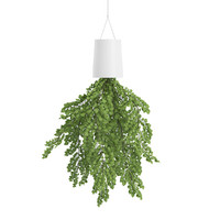 Plant in Inversed Hanging Planter