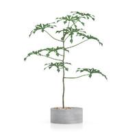 plant concrete pot 3d model