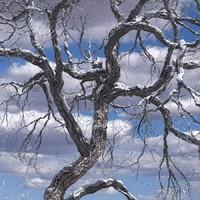 broadleaf leaf tree max