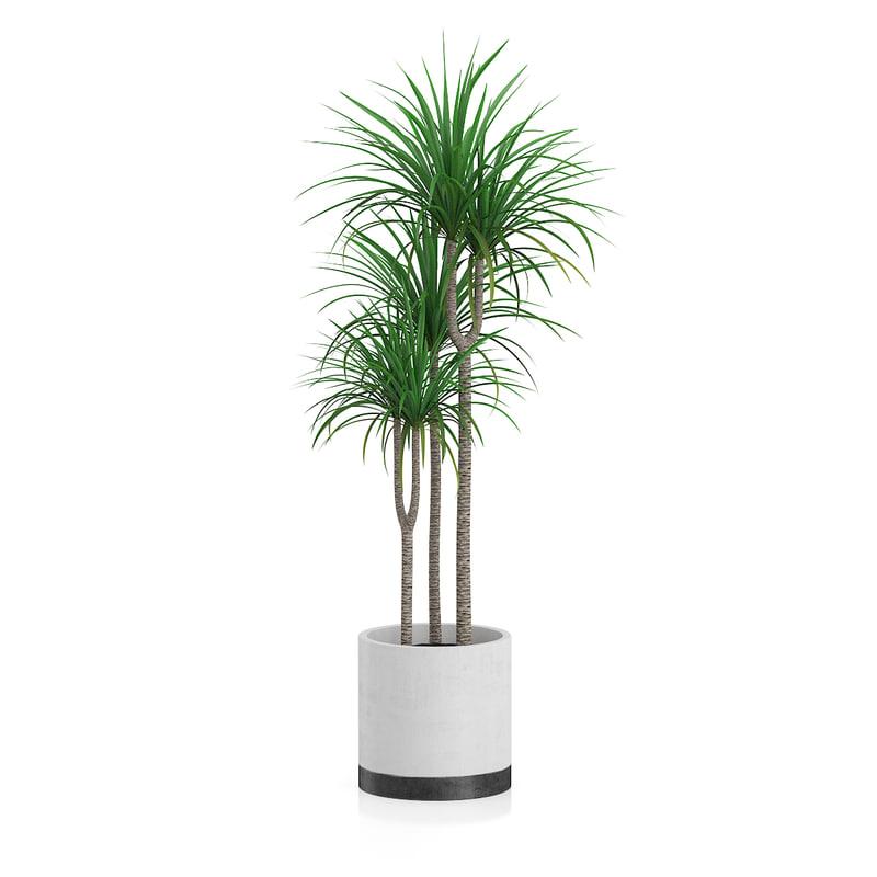 3d obj dracena plant
