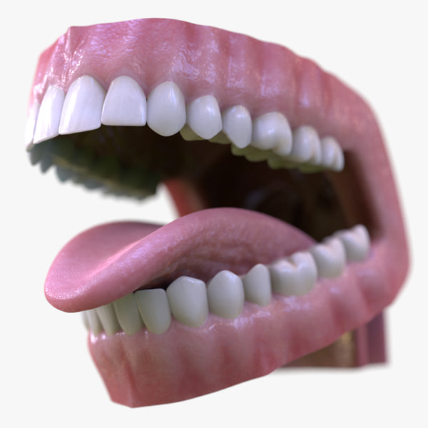3d dental mouth realistic tongue model