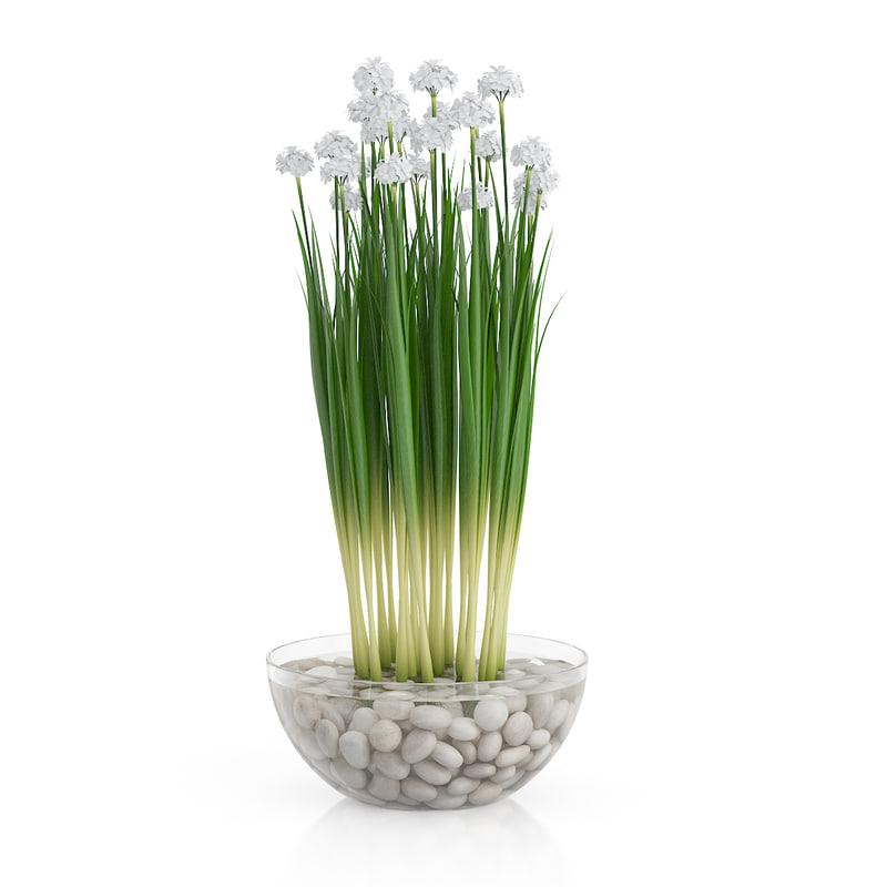 white flowers glass vase max