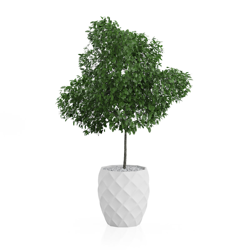 potted tree 3d model