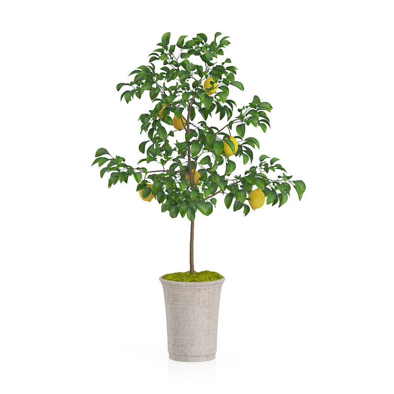 c4d lemon tree