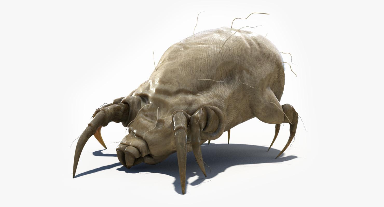 3d model dust mite