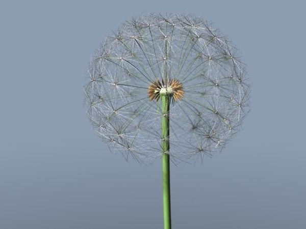 3d model dandelion seeds
