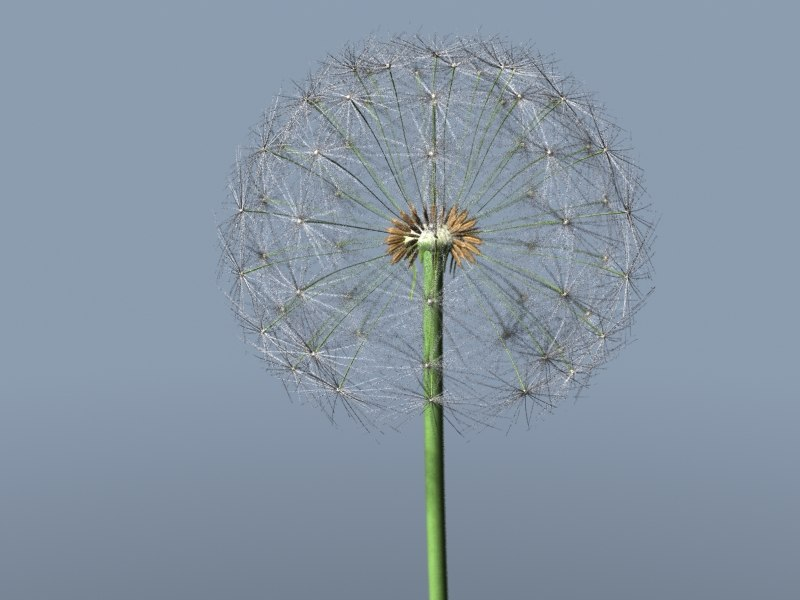 3d model dandelion seeds