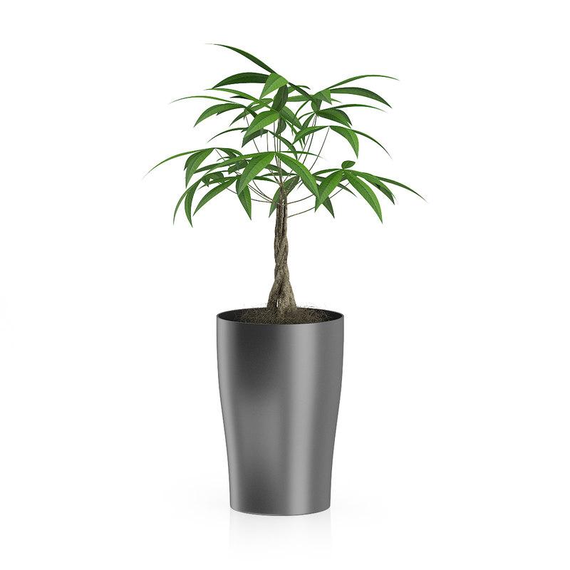 max money tree dark pot