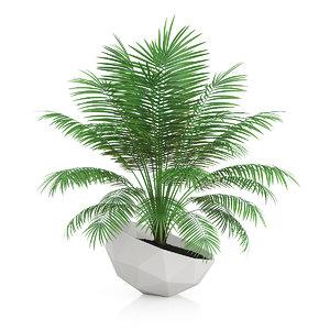 3d palm tree modern model