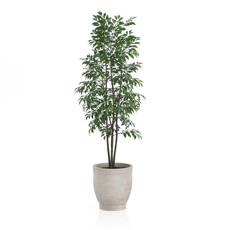 Max small tree stone for Short trees