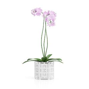 pink orchid flower hexagonal 3d max