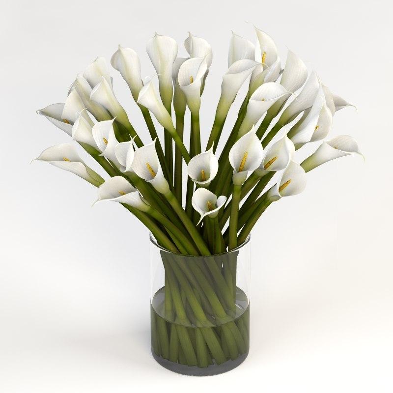 3d realistic calla lilies