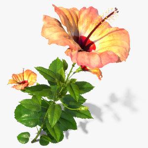 hibiscus flower open 3d model