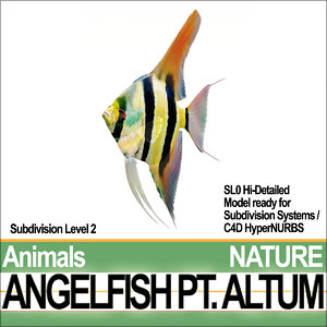 3d angelfish altum