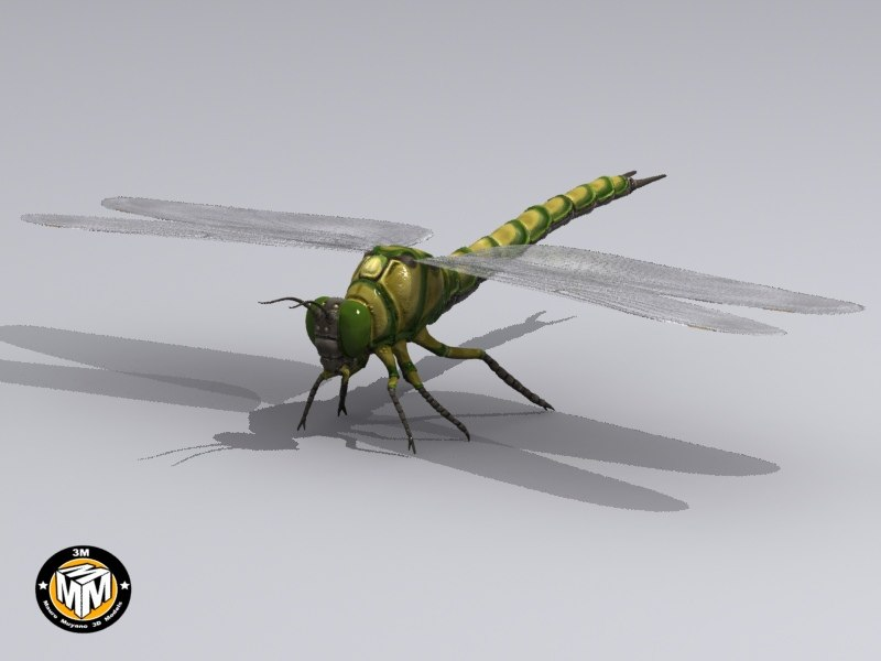 max insect carboniferous