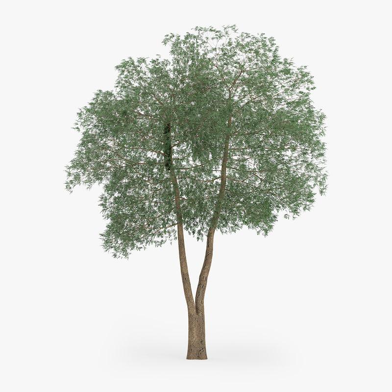 yellow birch 13 1m 3d obj