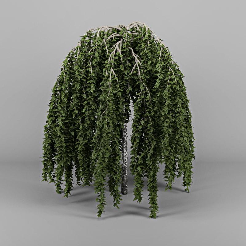 3d betula bark leaf
