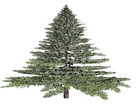 3d model red cedar tree x-mas