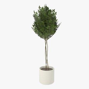 modern pot planted 3ds