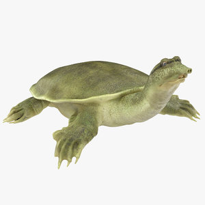 max chinese softshell turtle rigged