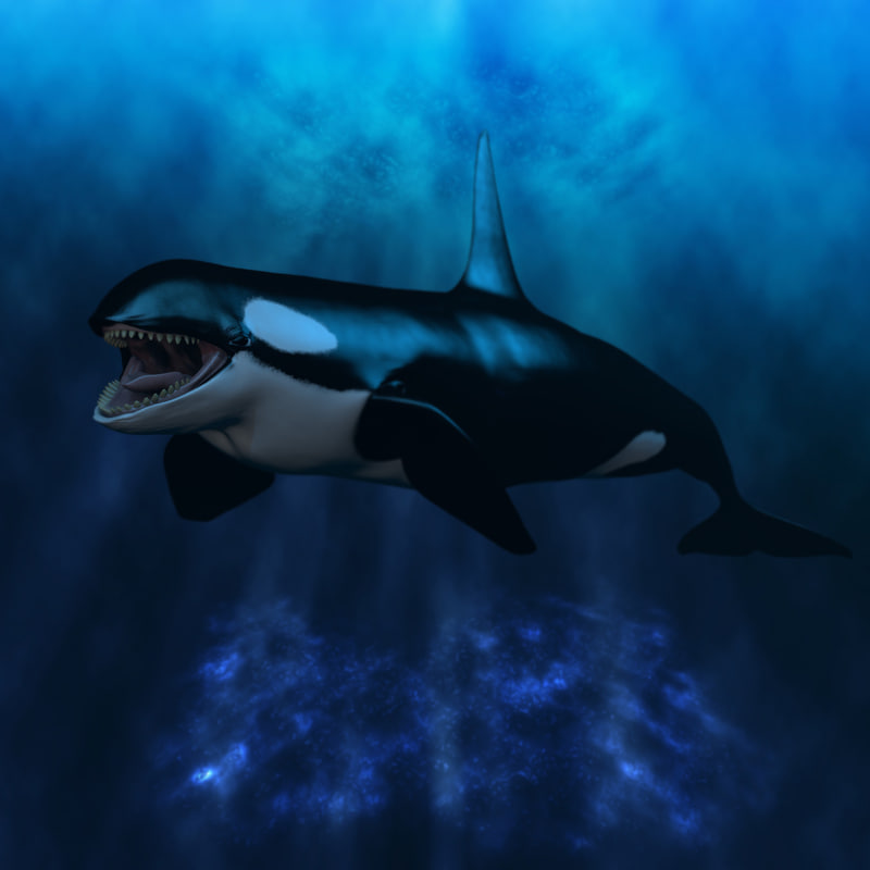 3d model killer whale