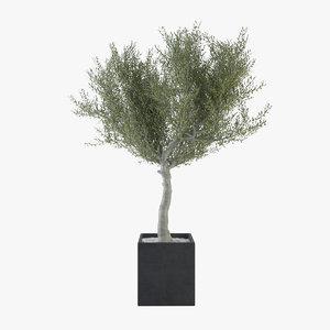 olive tree 3d max