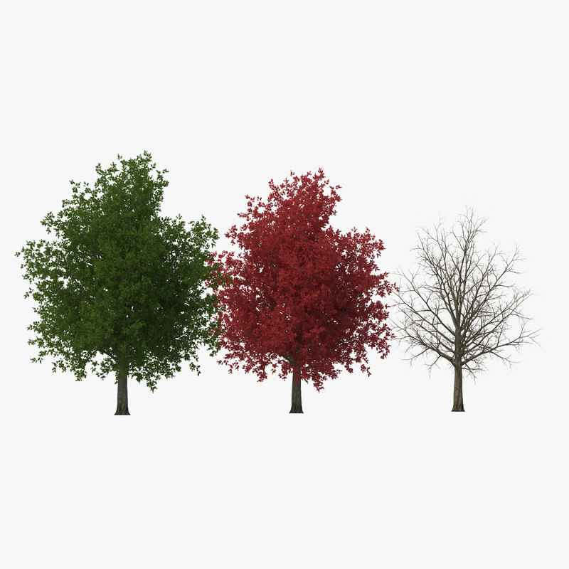 c4d red maple tree modeled
