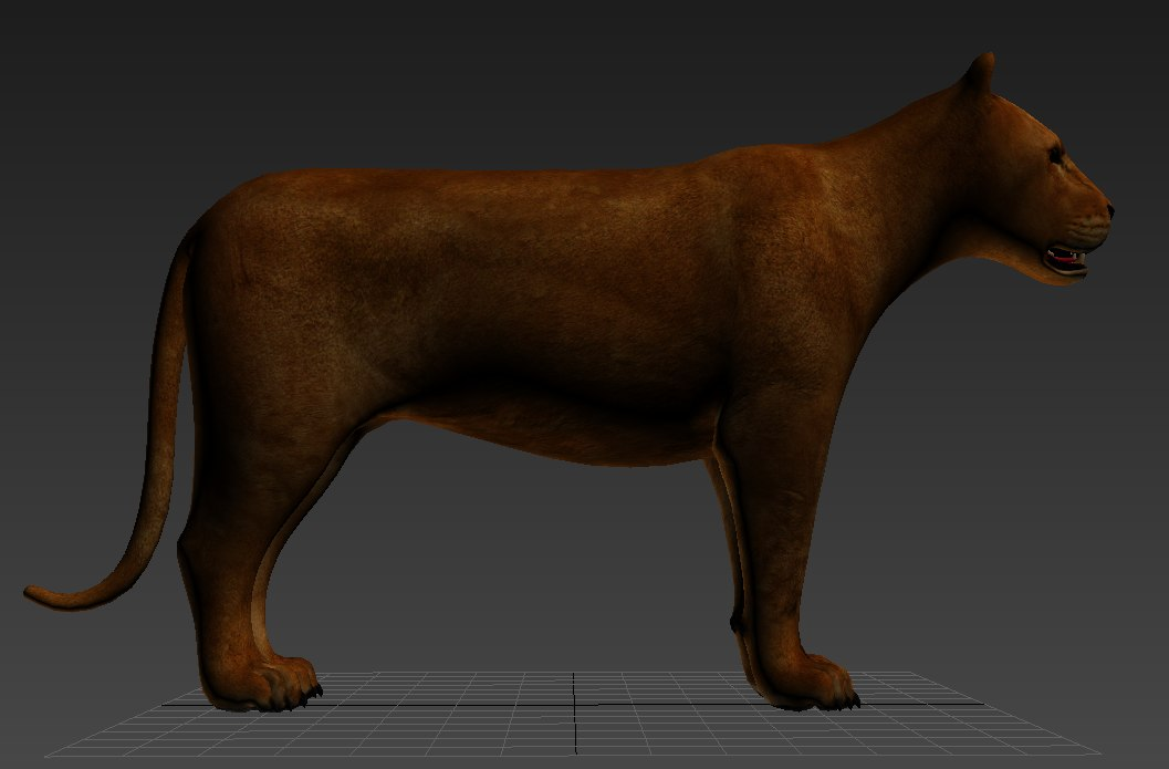 lioness lion 3d model