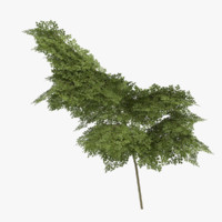 ready bush 3d model