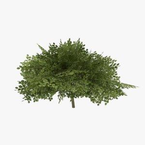 3d ready bush model