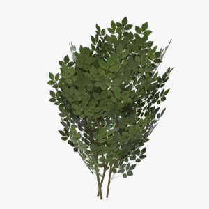 3d shrub ready model