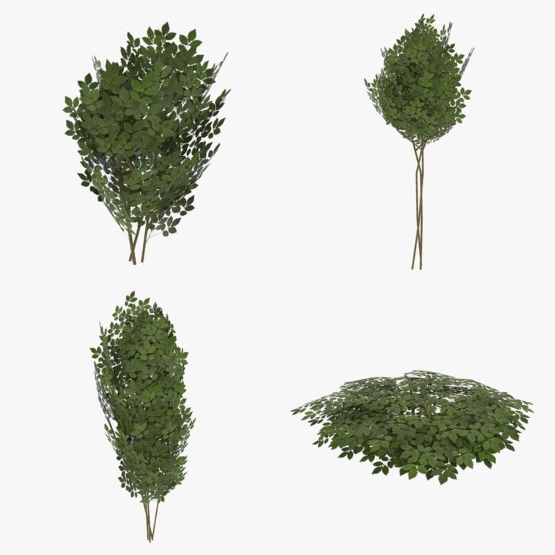 3ds ready shrub