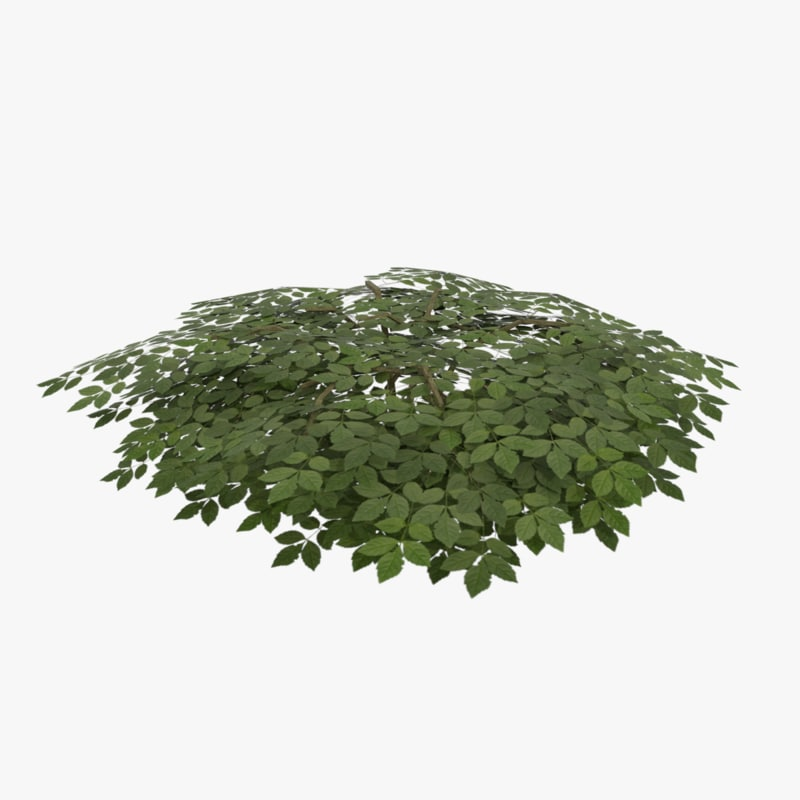 3d model shrub ready
