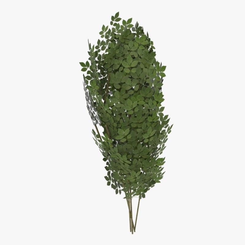 shrub ready 3d model
