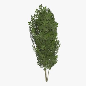 shrub ready 3d model