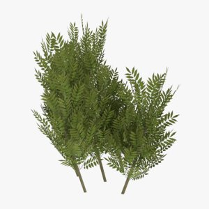 3d ready bush