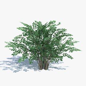 bush summer winter 3d model