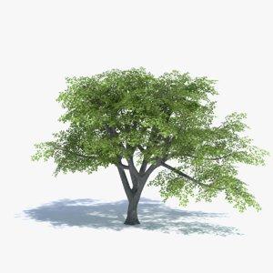 3d oak tree