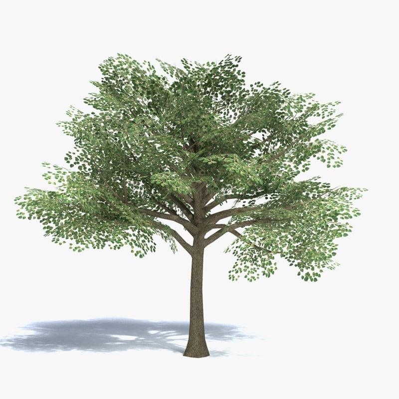 medium size tree 3d 3ds