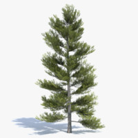 Low Poly Pine Tree 2
