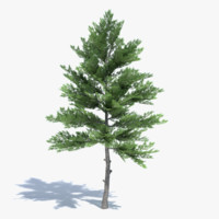 Low Poly Pine Tree