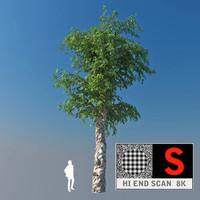 3d scanned 8k