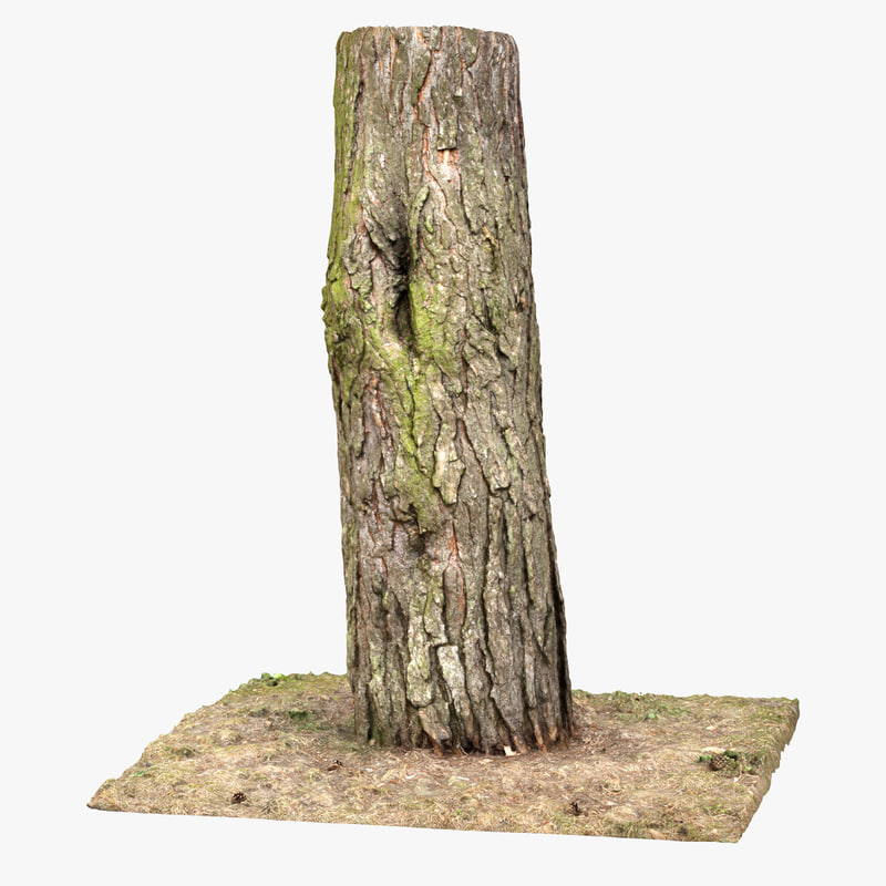 tree trunk scan obj
